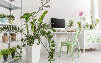 Des plantes d'intérieur pour embellir votre chez-vous ?